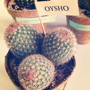 cactus oysho 1