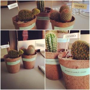 cactus oysho 2